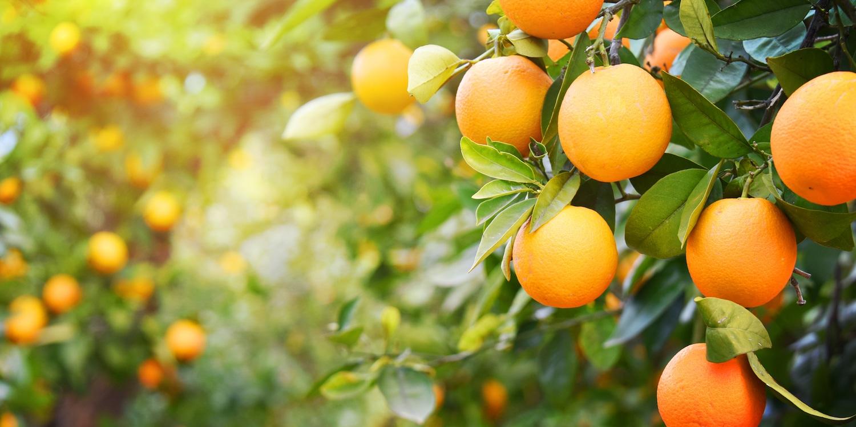 Fideicomisos para la promoción de la actividad agrícola-ganadera